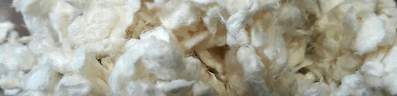 cellulose%20brute%20Lorien%20Bande.jpg