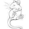 Help gros problème lors de l'intégration d'un nouveau rat - dernier message par Callioppe