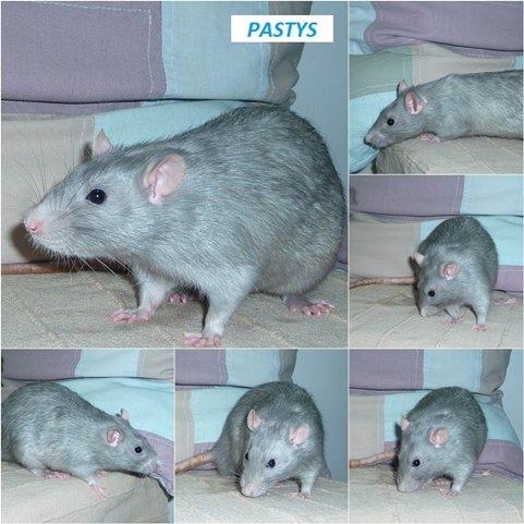 pastys2.jpg