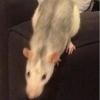 2 rattounettes